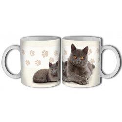 Cicás bögre, Brit rövidszőrű macska