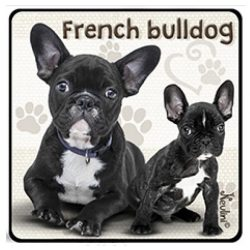 Kutyás hűtőmágnes, French Bulldog