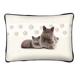 Cicás díszpárna, Brit szürke macska