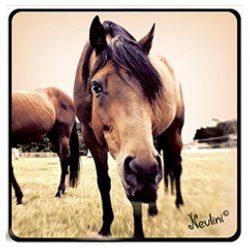 Lovas hűtőmágnes, barna ló selfie
