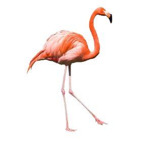 Flamingó ajándékok